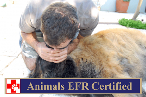 Animals EFR Certified