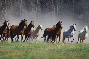 Equine Behavior Course